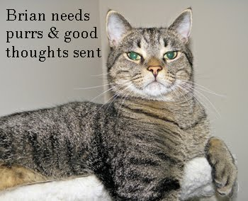Lots Of Purrs & Prayers