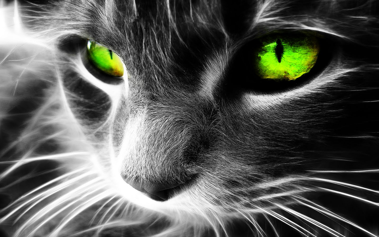 Gallery For gt Black And White Cat With Green Eyes Kitten