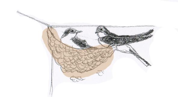 ahorrar, golondrinas comen insectos
