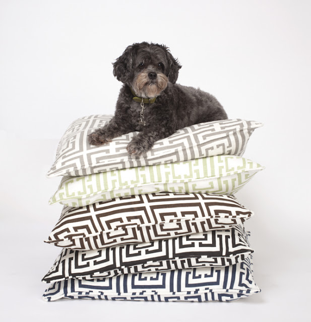 Dog sitting on a stack of COCOCOZY Logo pillows