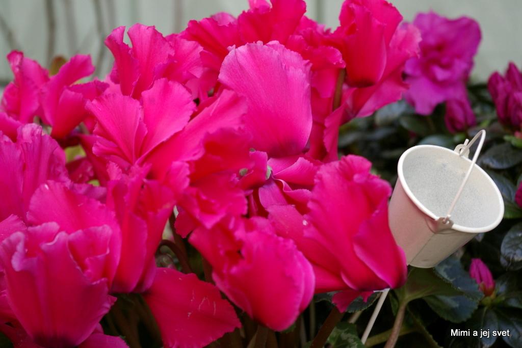 Menovky: bratislava , fotografie , jar , kvet