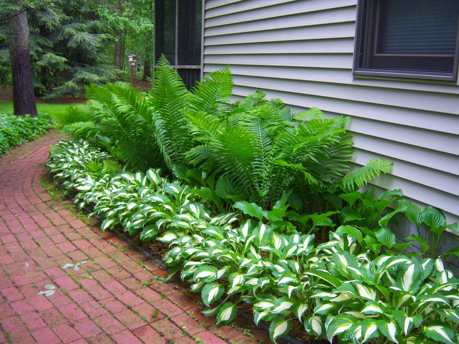 Landscaping With Ferns : Ferns and hostas want for my garden