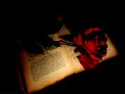 Un fondo de escritorio con un libro abierto y una rosa roja.