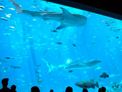 The Georgia Aquarium Whale Shark