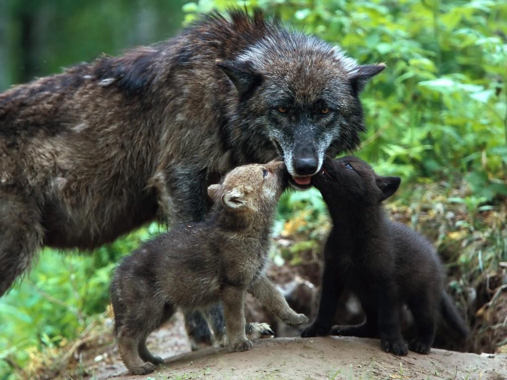 Animals Of Planet Earth Animalitos