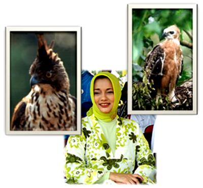 Marissa Haque: Spizaetus Bartaelsi si Elang Jawa Garuda Pancasila