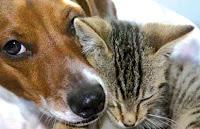 cuidar el Hogar de tus Mascotas