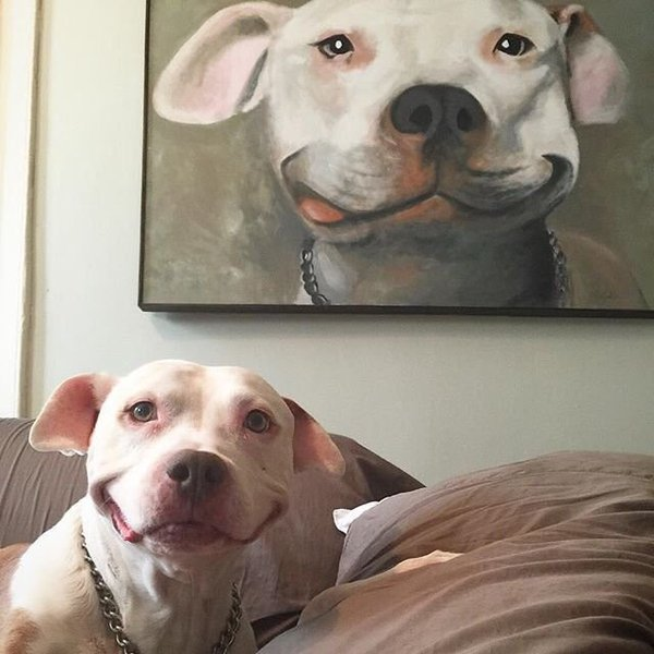 Cute dogs - part 104, funny dog pictures, best funny dogs, dog photos
