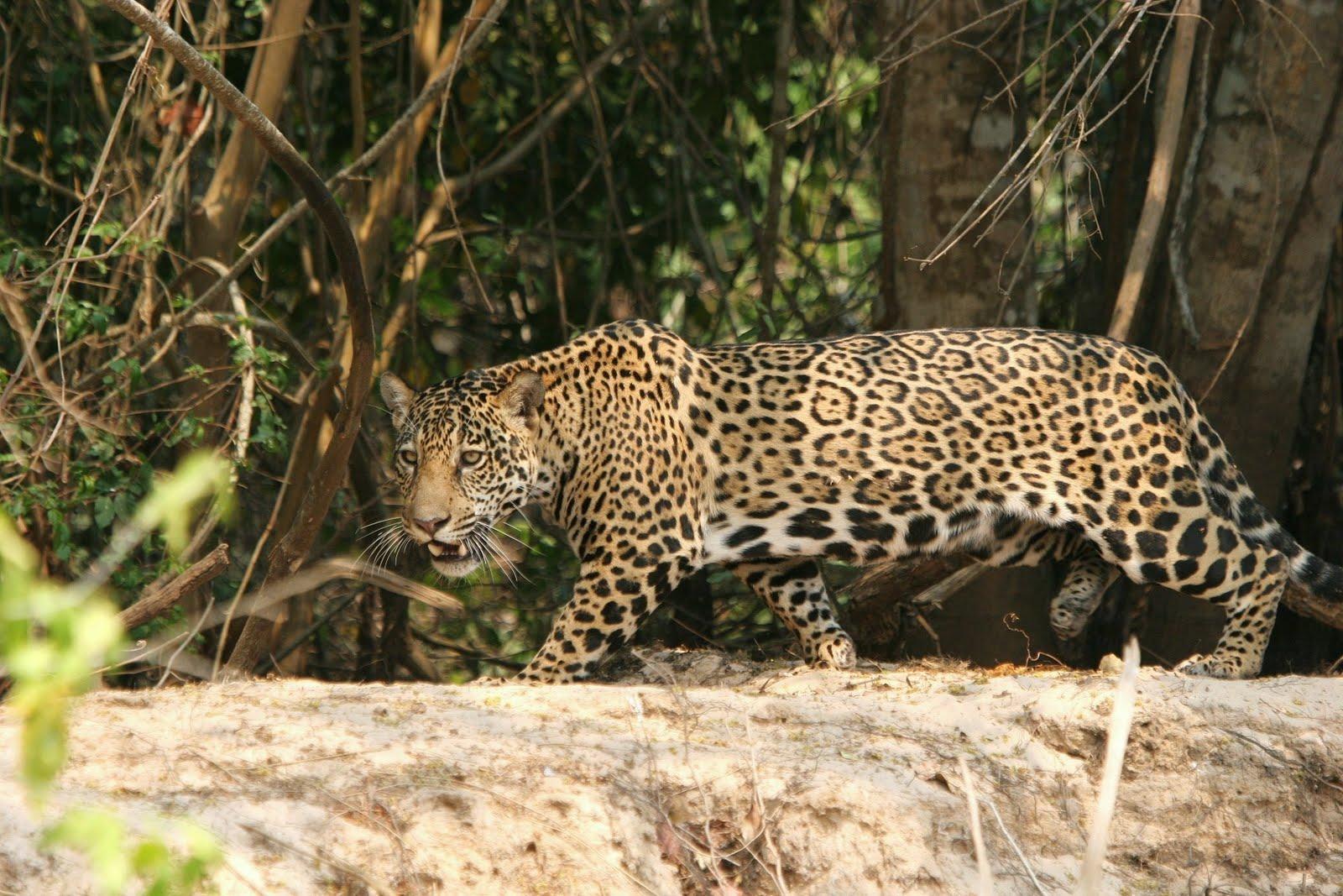 Brazil Ecoexplorer   Nature Wildlife tours  Birding trips