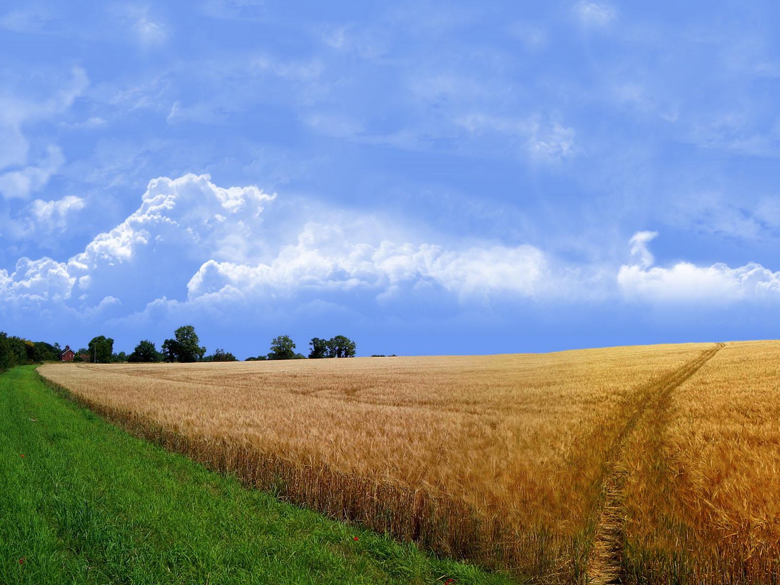 http://2.bp.blogspot.com/-rZPI_hL5LCg/TktOVqooRGI/AAAAAAAAAHw/CPvPK8JdONA/s1600/Nature_summer_Wallpaper6.jpg