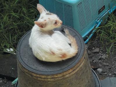 Foto-Foto Anak Kucing Lucu di Luar Jendela Kamar Kost Gue 10