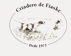 Pointer de Fiaske