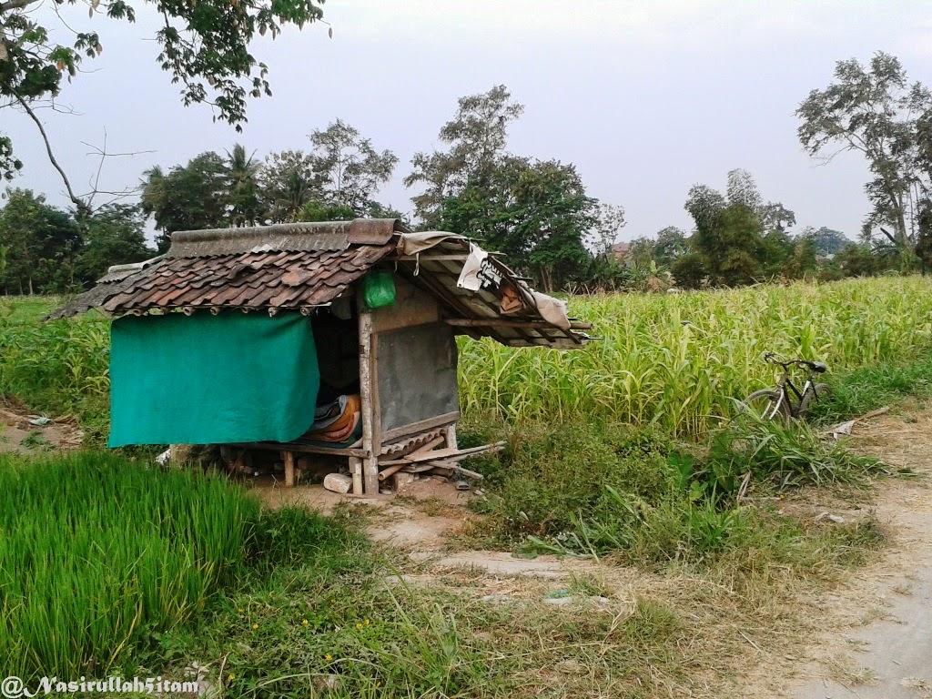 Jalanan setapak, Jagung dan rumput, serta gubuk dipematang sawah