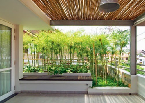 grow the bamboo, betel in the terrace | Vietnam Outdoor Furniture