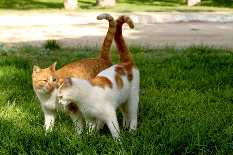 Two loving cats rub their bodies and tails together