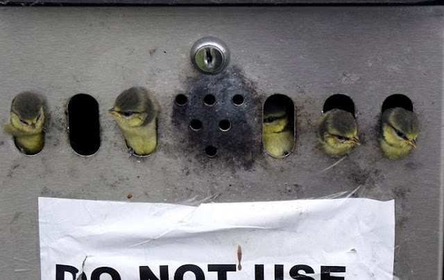 A family of birds made a nest in a public ashtray in Wales, birds nest