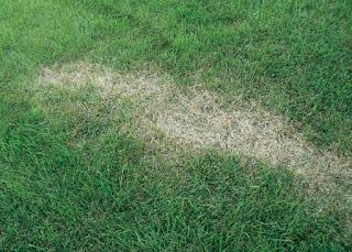 Relva | Grass