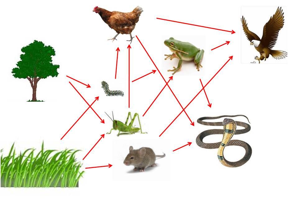 Kacamata Pelangi Ipa Rantai Makanan Pada Ekosistem Adalah