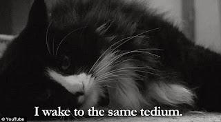 i wake to the same tedium cat