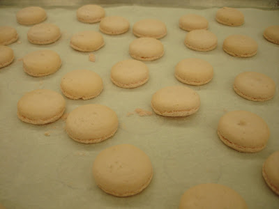 macarons resting on sheet pan