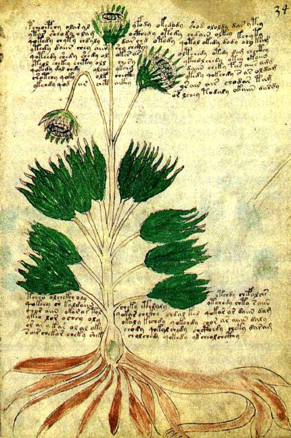 Herbario Voynich