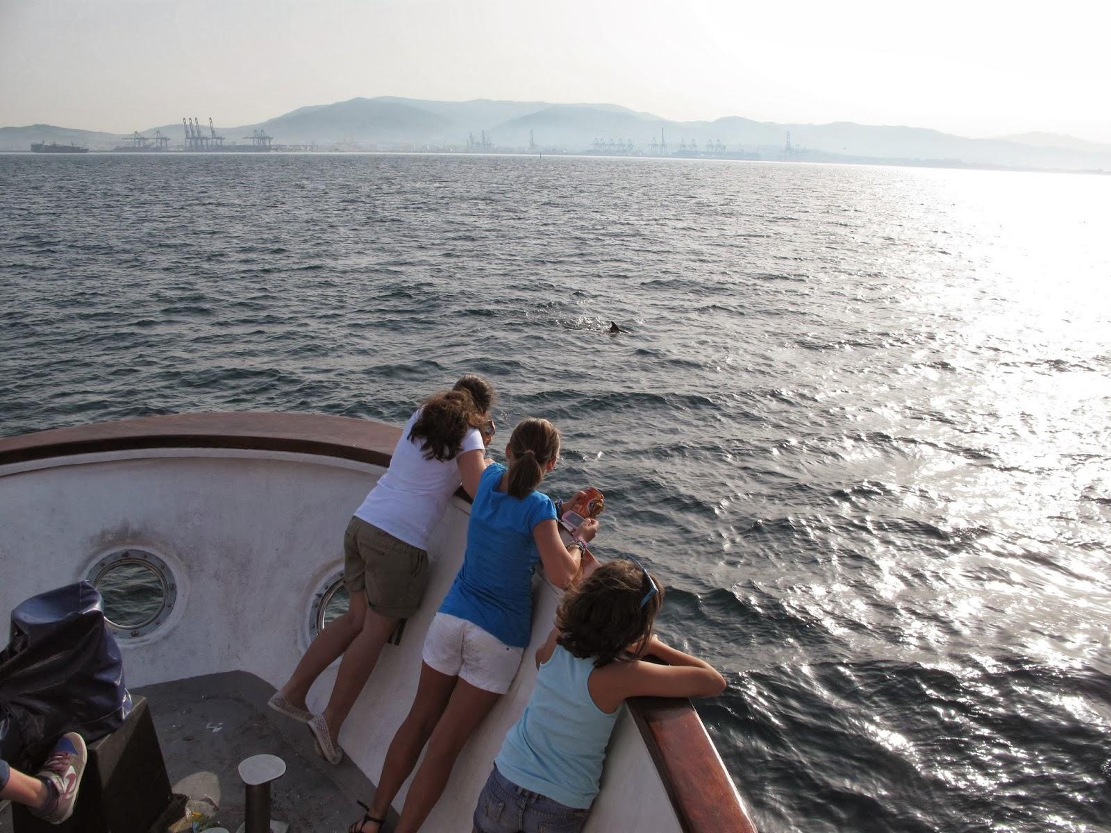 Delfines desde Jackelin en la Bahía de Algeciras