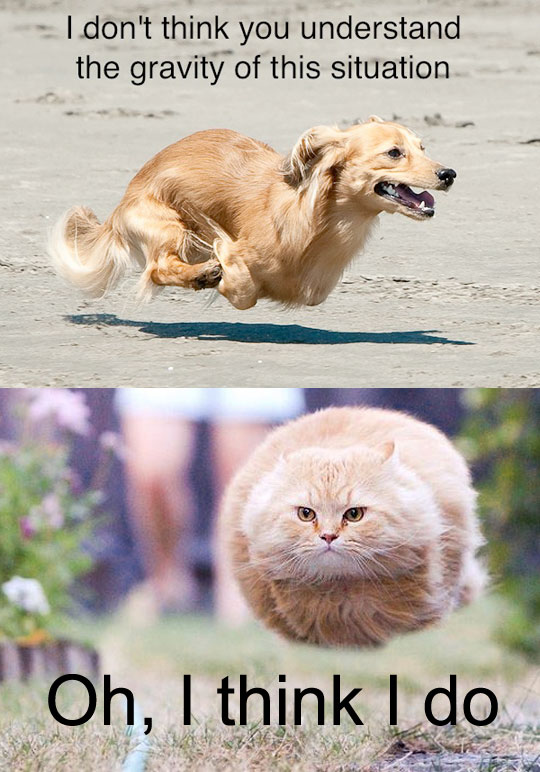 Hover Dog - Hover Cat
