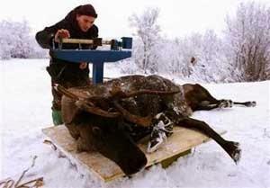 Orang-orang di Rusia Utara