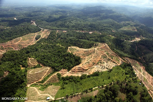 Deforestation in Malaysian Borneo for oil palm plantations. Click to enlarge.