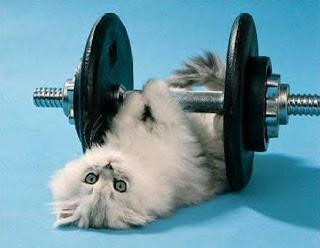 Gato haciendo pesas