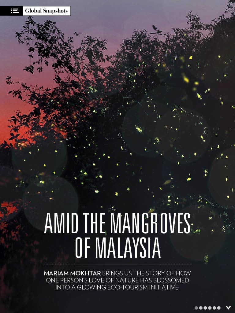 Amid The Mangroves of Malaysia