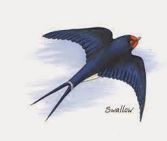 The Queen Swallow's Present