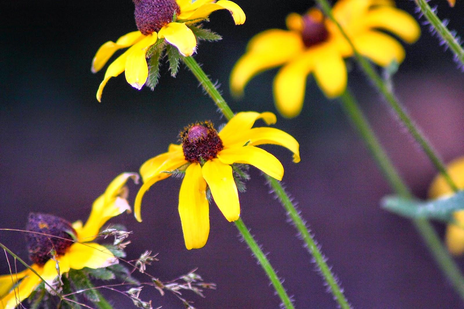 أجمل صور الزهور