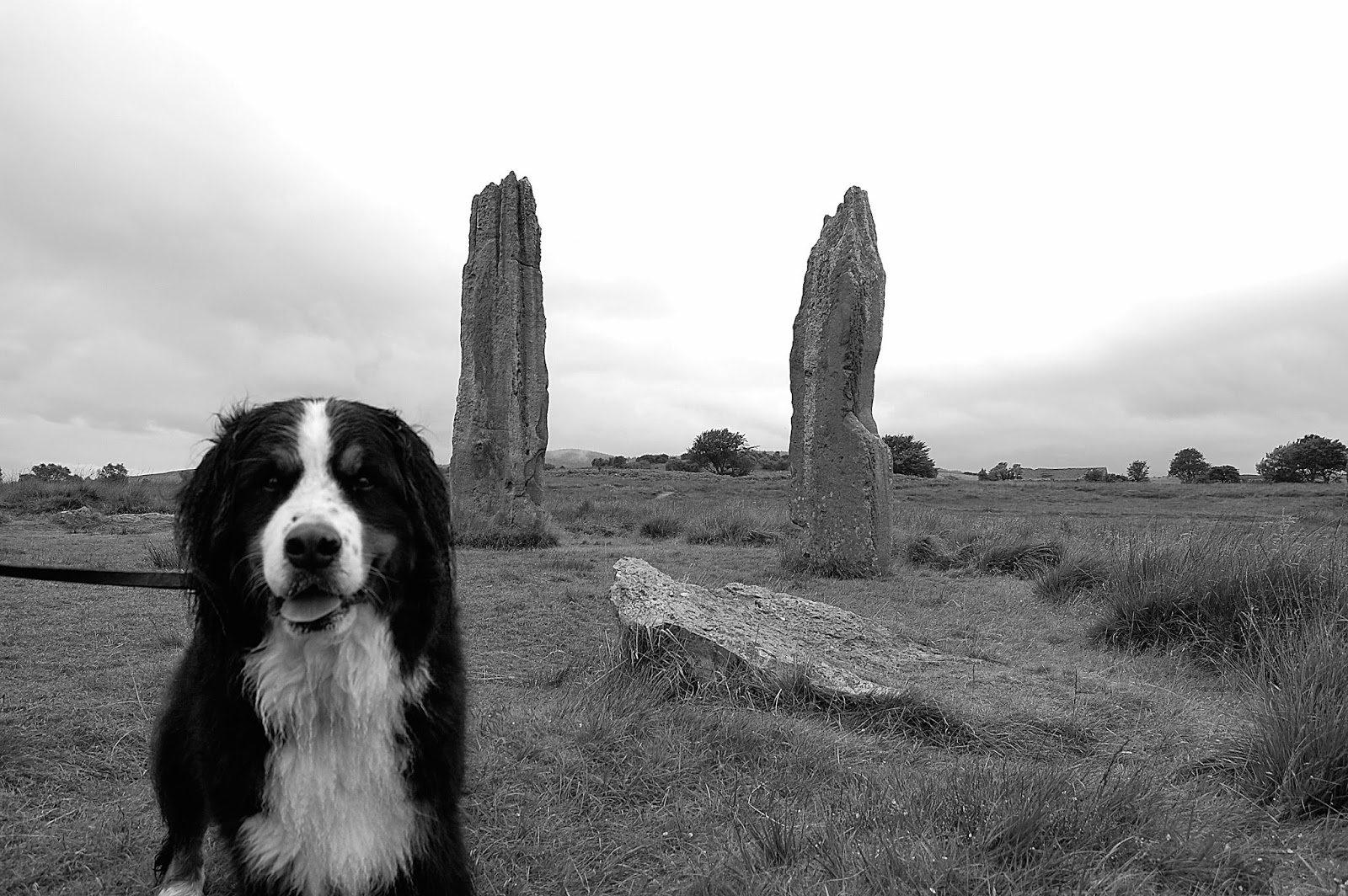 Mattie at the Machrie Moor stone circles