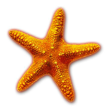 This is a picture of a orange Star Fish.Very pretty