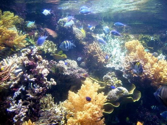 Large aquarium underwater world singapore