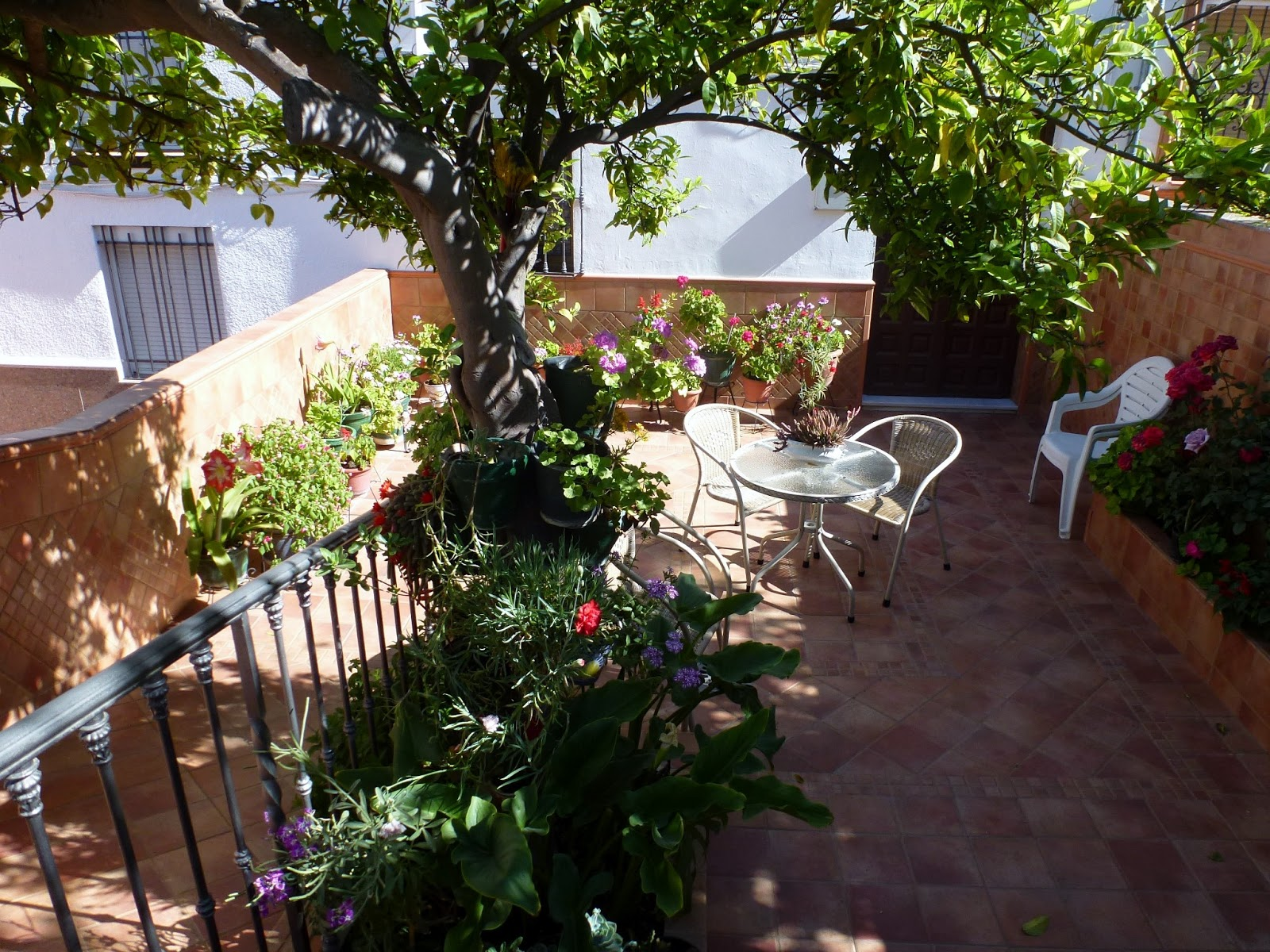 Olvera diary los balcones patios y jardines de olvera for Patios y jardines