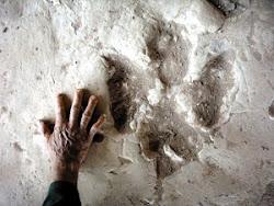 Huella fosilisada