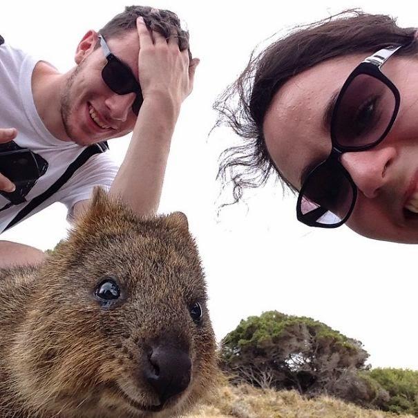 quokka selfie trend australia-6