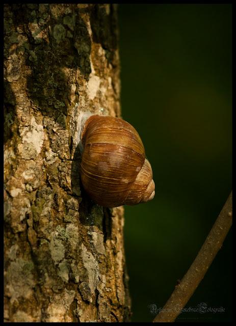 Eine Schnecke am Baum