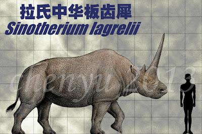 Sinotherium