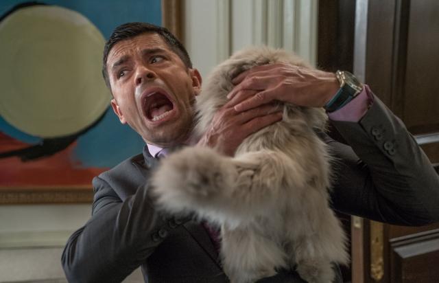 Hình ảnh phim Bố Tôi Là Mèo