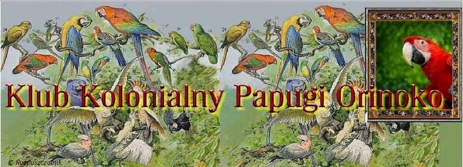 Klub Kolonialny Papugi Orinoko