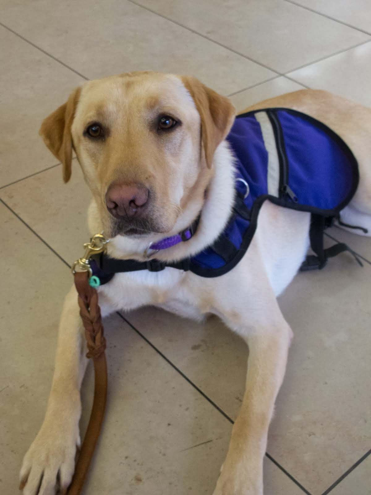 What is a Service Dog?