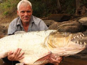 Hasil gambar untuk ikan piranha terbesar