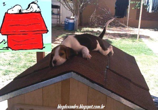 Real+Snoopy.jpg (600×421)