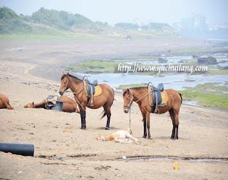 Kuda Jeju