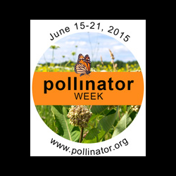 Fix National Pollinator Week Is Coming After TheRainshowers nationalpollinator