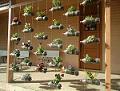 Vasos de cultivo