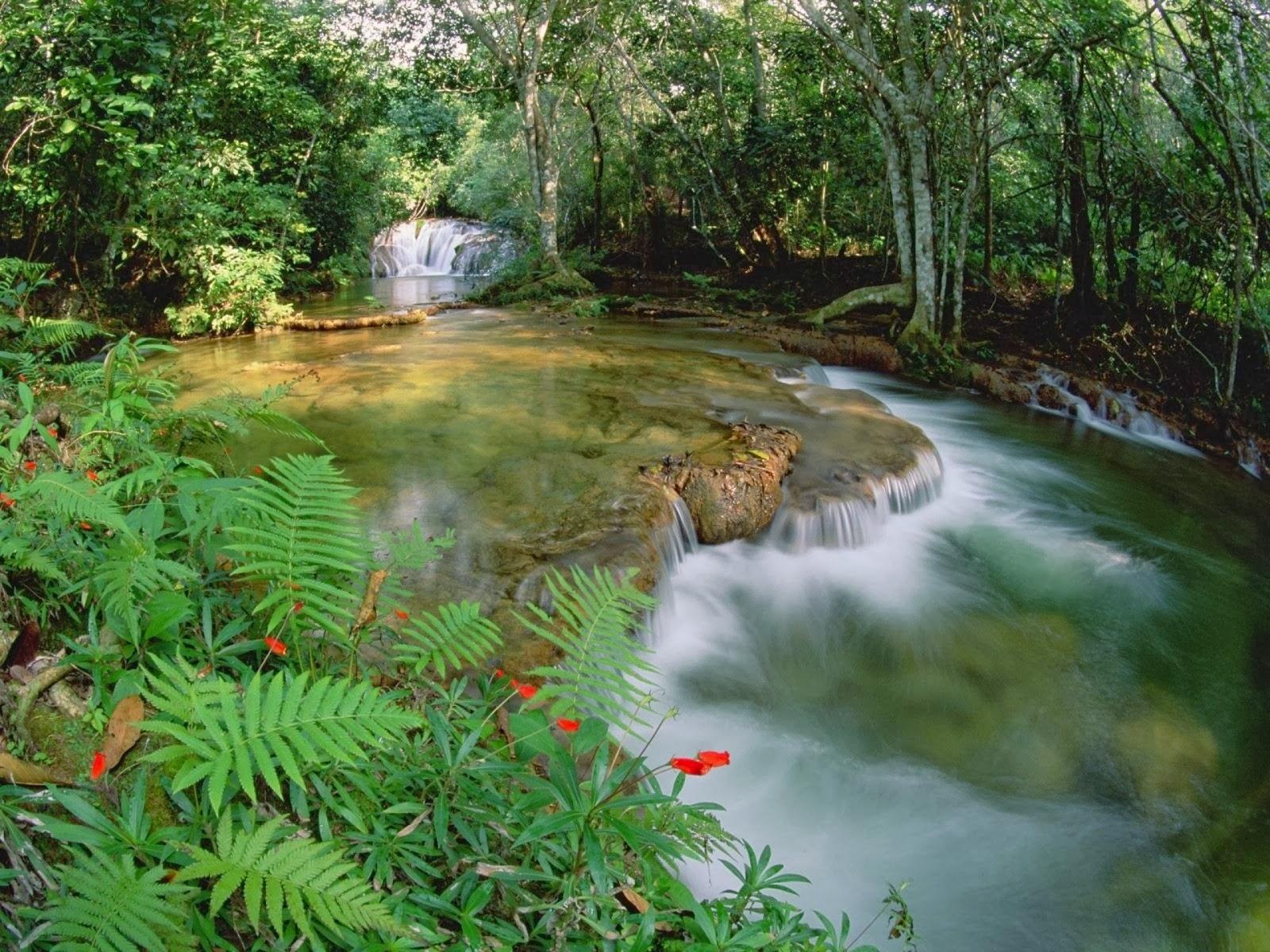 Árboles cascada planta & río